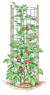 plant stand striking tomatolant stand images concept diy cage