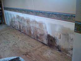 upkeep masters offer mold inspection and removal services for