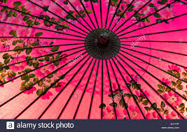 traditional japanese style pink oil paper umbrella with a cherry stock photo traditional japanese style pink oil paper umbrella with a cherry blossom motif japan