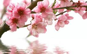 Image Of Spring Flowers by Pictures Of Spring Flowers 44 Wujinshike Com