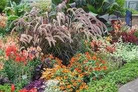 purple grass garden design
