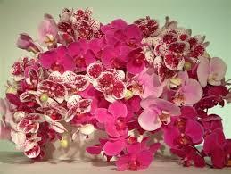 Flowers Nyc Lotus Flowers Nyc Lotusflowersnyc Twitter