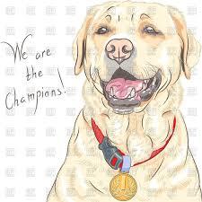 portrait of happy champion dog labrador retriever with medal
