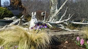 spring in michaele u0027s garden in tennessee fine gardening