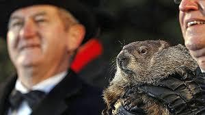 u0027s groundhog bill murray punxsutawney phil