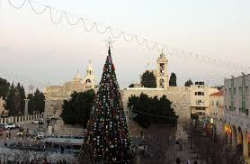 tree in manger square bethlehem photograph by munir alawi