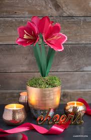 amaryllis paper flower lia griffith