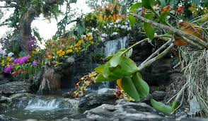 Singapore Botanic Gardens Location Singapore Botanic Gardens Worldatlas