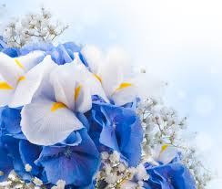 white and blue flowers flowers white blue flowers blossom lotus flower wallpaper