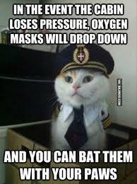 Random Cat Meme - 26 funniest internet memes bajiroo com