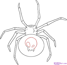 drawn spider web black widow spider pencil and in color drawn