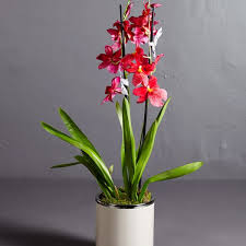 oncidium orchid oncidium orchid larry walshe floral design