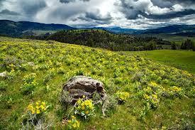 Wyoming landscapes images Free photo yellowstone wyoming landscape scenic national park jpg