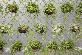 Fence Decorations Chain Link Fence Decorations Plants Fence Ideas Creative Chain