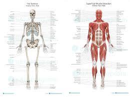 Anatomy Of The Human Skeleton Human Skeleton Anatomy Chart Human Anatomy Poster Skeleton