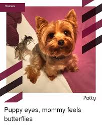 Puppy Eyes Meme - youcam patty puppy eyes mommy feels butterflies meme on sizzle