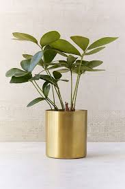 best 25 brass planter ideas on pinterest big plants indoor