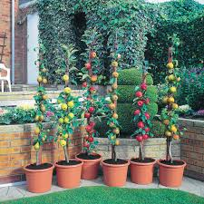 can you grow apple trees in pots 5 tips for growing your own bt