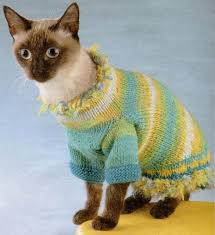 sweaters for cats 30 knitted hats and sweaters for cats and dogs modern pet design