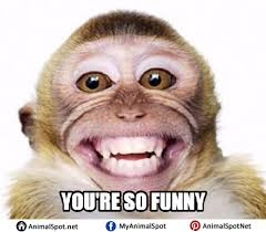 Baby Monkey Meme - monkey memes