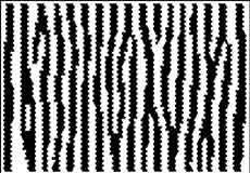 pattern formation zebra natural history magazine