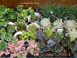 Mini Fairy Garden Ideas by Miniature Gardening Town And Country Nurseries