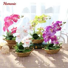 orchids for sale discount flower pots for orchids 2018 flower pots for orchids on