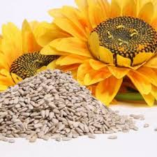 the best seeds for treating migraines step to health