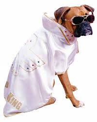 Elvis Halloween Costumes 15 Cool Dog Halloween Costume Ideas Shelterness