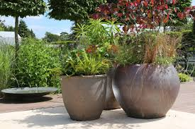 choosing the right pots and planters clifton nurseries