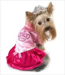 Female Dog Halloween Costumes 118 Dog Halloween Costumes Images Animals Dog