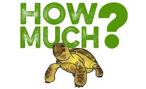 how much does a tortoise cost beginner guide