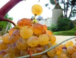 Best White Wine For Thanksgiving Thanksgiving Dinner Wine Pairings With Tips From Robert Parker