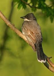South Carolina birds images Perching birds JPG