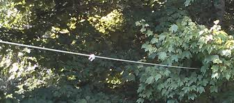 Backyard Zip Line Diy Dog Zip Line For Backyard Home Outdoor Decoration