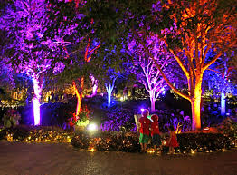 Phoenix Zoo Christmas Lights by Category The Enchanted Garden Brisbane Family Explorers