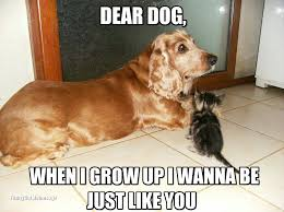 Cat And Dog Memes - image result for funny cat and dog memes animal pinterest