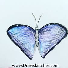 how to draw a butterfly blue morpho album on imgur