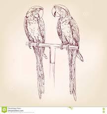 parrot hand drawn vector llustration sketch stock vector image