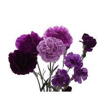 purple carnations purple flowers carnations mix set wedding