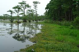 native plants and animals caddo lake institute