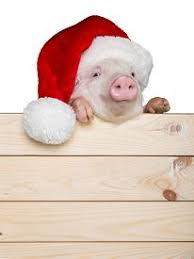christmas pig christmas pig images photos pictures