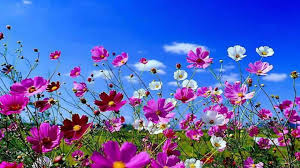 Beatuful Beautiful Spring Flowers Wallpapers Wallpapersafari