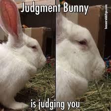 Silly Rabbit Meme - silly rabbit the best rabbit of 2018