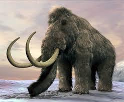 mammoth mammuthus u2013 prehistoric elephant dinoanimals