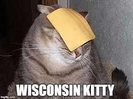 Cheese Meme - cats with cheese meme generator imgflip