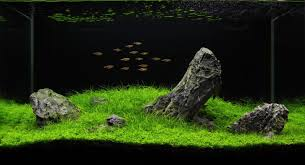 Most Beautiful Aquascapes Manage Your Freshwater Aquarium Tropical Fishes And Plants
