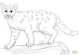 baby cougar coloring page free printable coloring pages