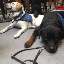 national service dog month 10 little known facts about service dogs