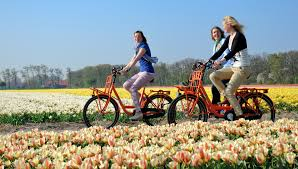 an exotic trip to see the beautiful flowers in amsterdam
